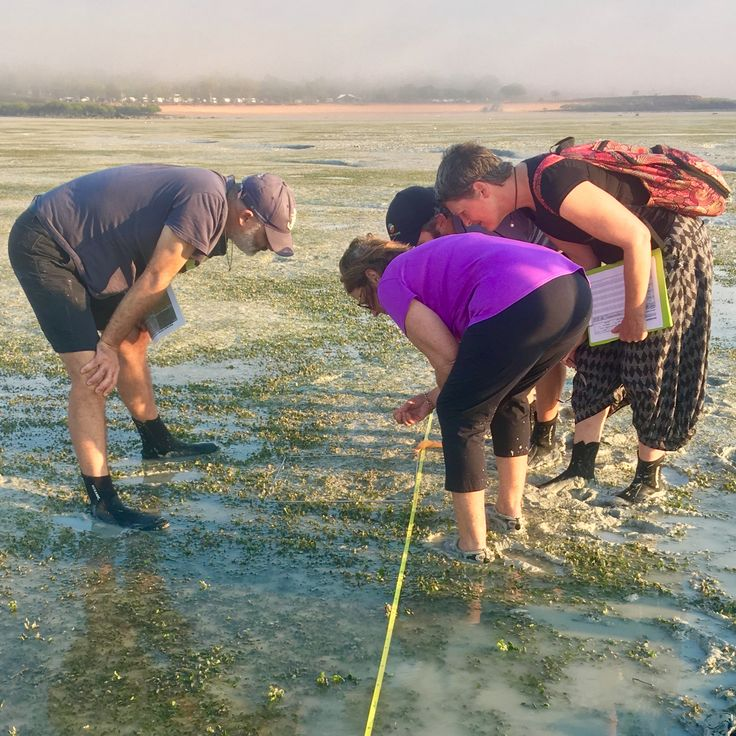 Every #seagrass quadrat a new source of #fascination! #BroomeSeagrass #Broome #RoebuckBay #YawuruCountry #Science #ThankSeagrass #Nature 🌱😄👍
