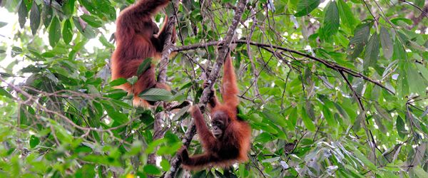 Gunung Leuser National Park on Sumatra, Indonesia.  500 species of animals, including nearly 200 types of mammals. Sumatran tigers and flying lemurs, along with clouded leopards, flying frogs and sambar deer