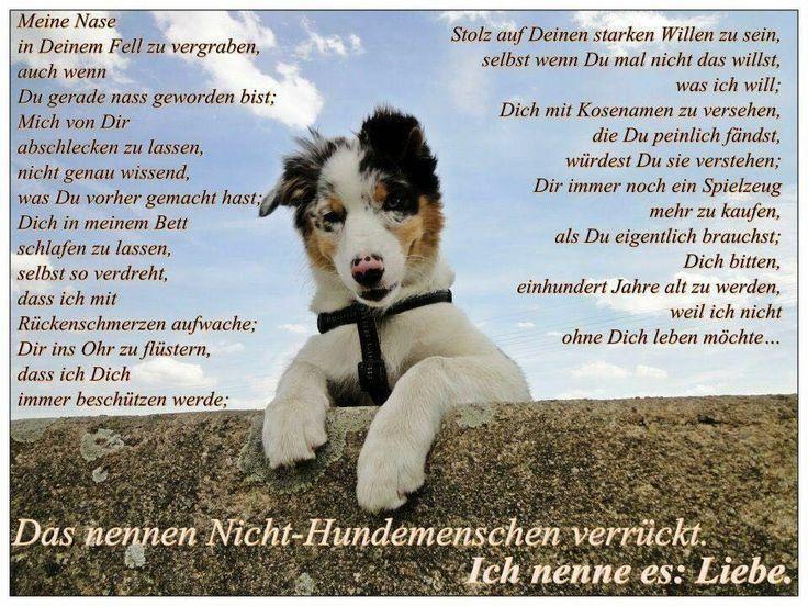 Hund Katze Maus Sonja Weihermann Katz Eund Hund Blog In 2020 Mit Bildern Hund Zitat Hund Und Katze Zitate Tiere