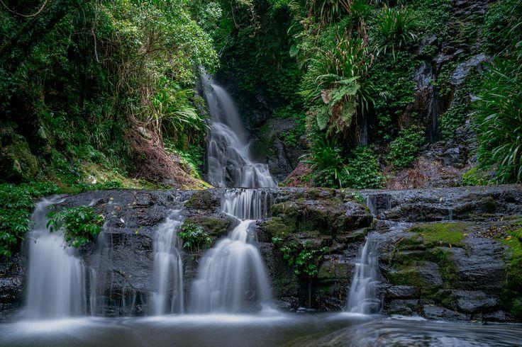 Lamington National Park - Box Forest Circuit Blog Pixels & Places