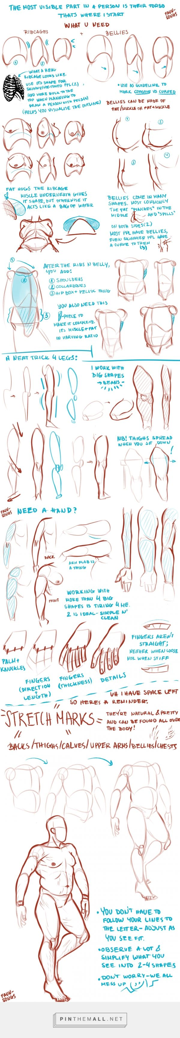 body drawing tips by faun-songs #tumblr #drawing #tutorial #figuredrawing #drawingtips #drawingtutorial #characterdesign