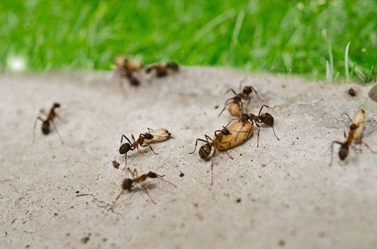 Laat een mierenplaag niet je terras doen verzakken