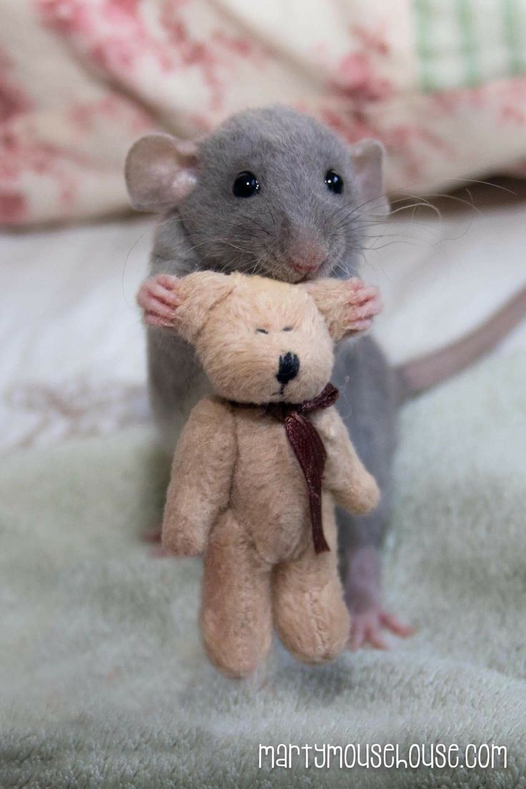 Dis my friend, his name is Ted. He keeps me company when I go to bed.  - Augie