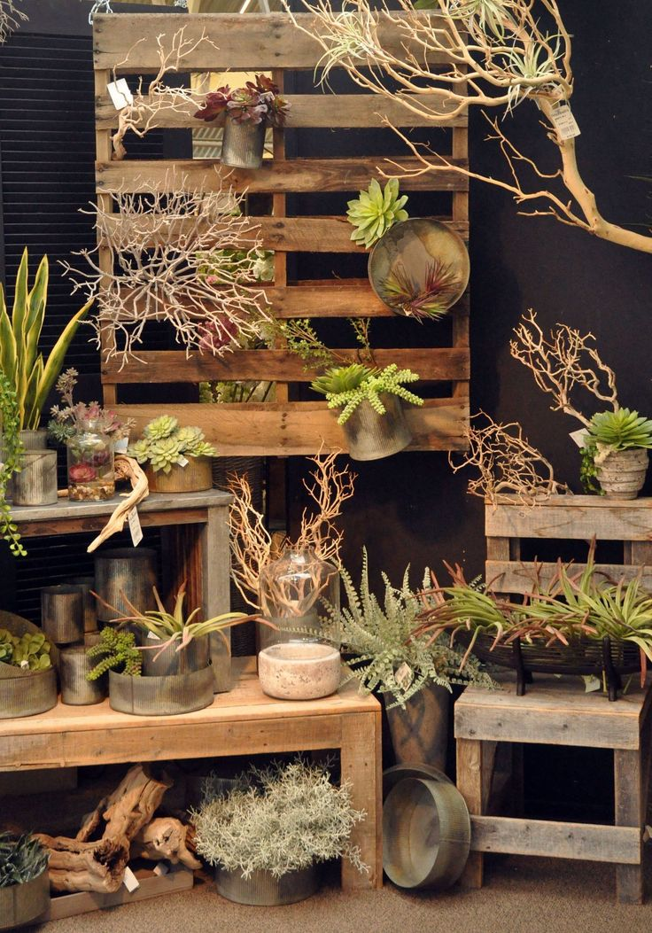21 Most Amazing Air Plant Display Ideas Decorating