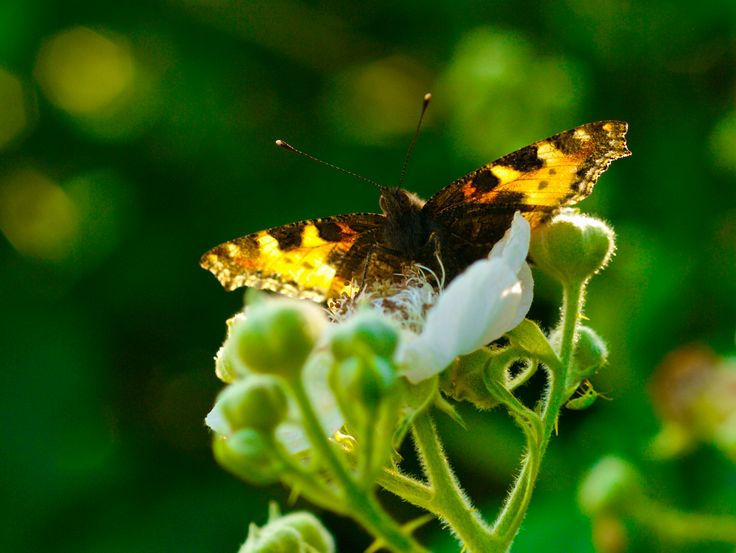 Photographer Pernille Westh | A beautiful butterfly · Get my 7 FREE basic photography tips - you need to know! http://pw5383.wixsite.com/free-photo-tips