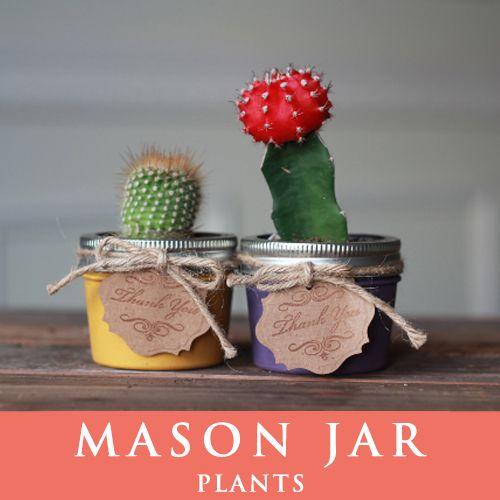 メイソンジャー 多肉植物 サボテン Ball Mason jar メイソンジャー レギュラーマウス 4oz メイソンジャープランツ 植物 ギフト