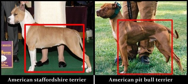 Pin On Bull Terriers