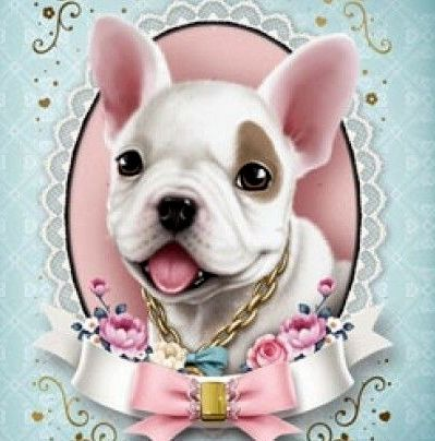 ♥ Jolie ♥ French Bulldog Puppy Love