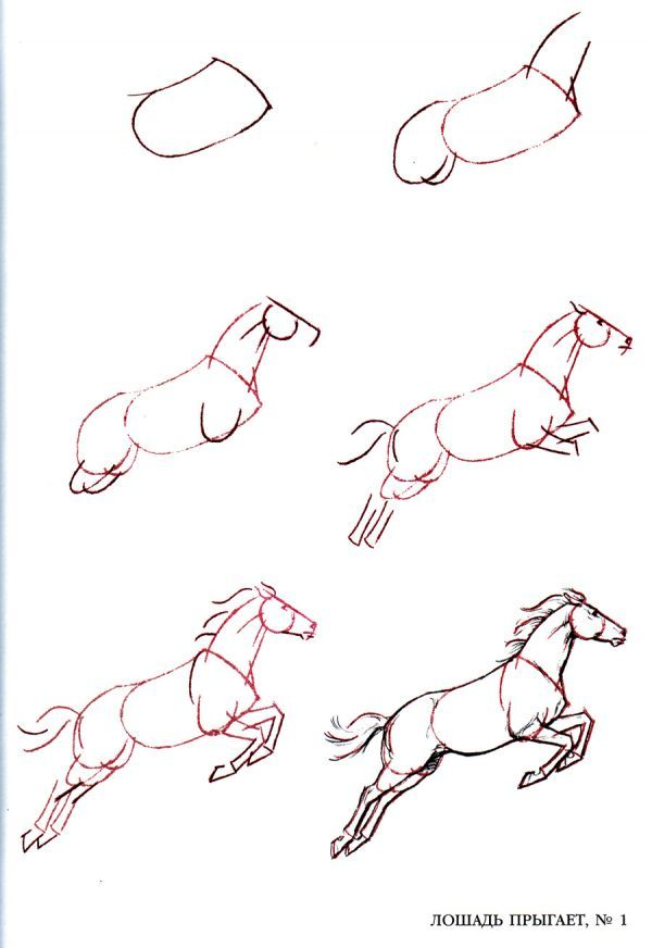как нарисовать лошадь карандашом поэтапно для начинающих ...