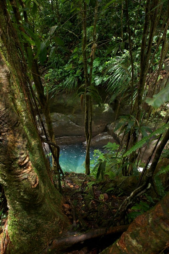 Waterfall #Ecotourism #VisitGuadeloupe #GuadeloupeIslands