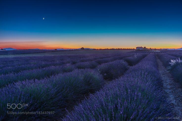 Lavendelfeld nachts by MarciMarcMmc via http://ift.tt/2g2nhBr