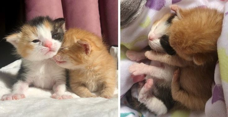 Kittens Rejected from Their Litter, Keep Each Other