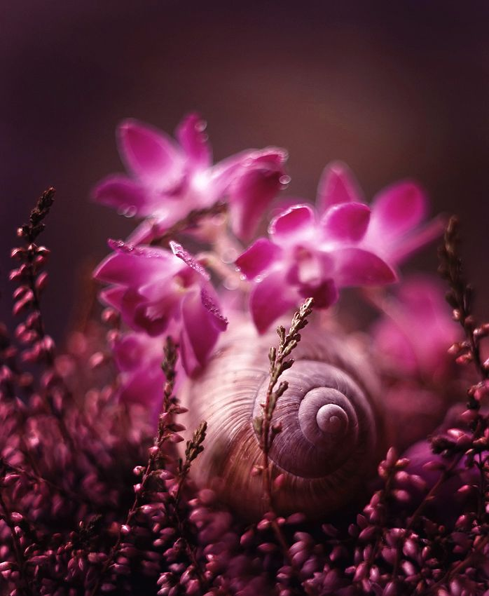 snail among the flowers... intense, dark pink