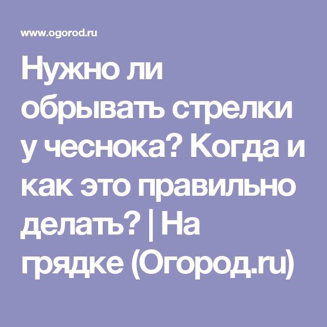 Нужно ли обрывать стрелки у чеснока? Когда и как это правильно делать? | На грядке (Огород.ru)