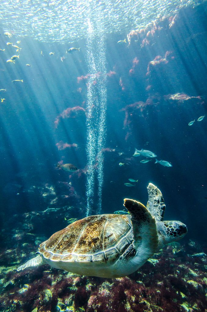 bright (by picboks) #sea_turtle #ocean_life