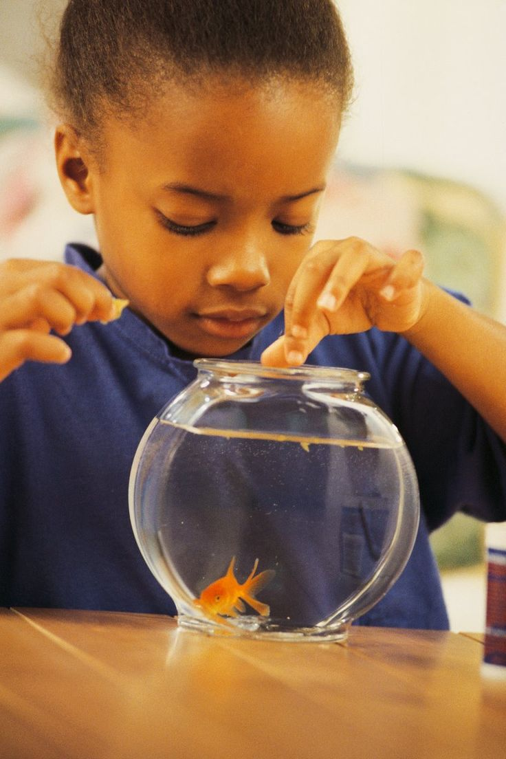 Class pet fish having a class pet will help the children for Fish for jobs