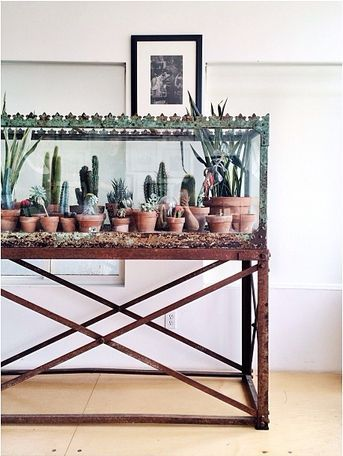 marvelous use of old fish tank. #succulents paulaCM.com