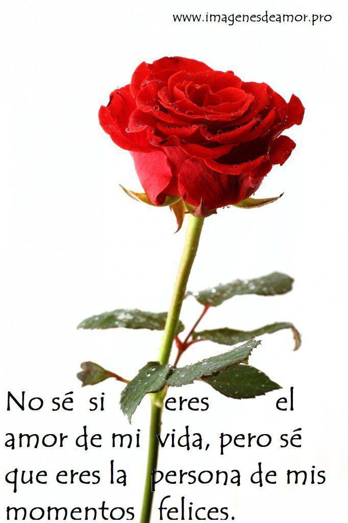 Imágenes de rosas con frases