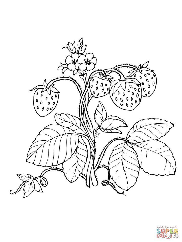 33 besten erdbeere bilder auf pinterest | erdbeeren
