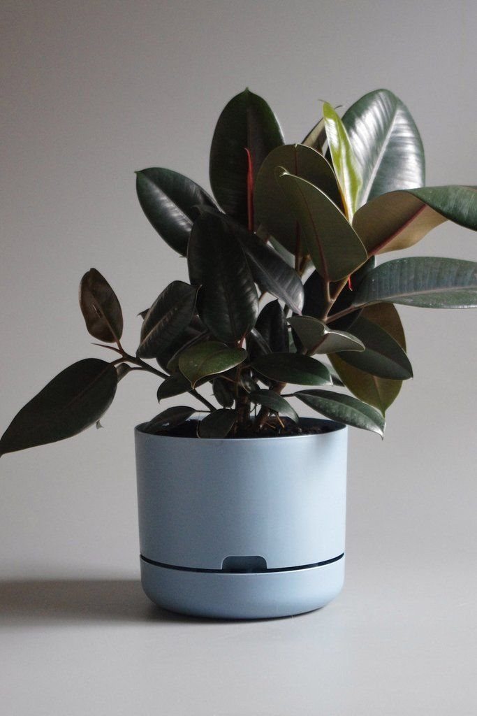 Selfwatering Plant Pot 250mm - Grey Blue or Pond Blue