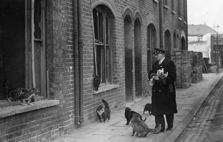 """A London Bus Driver feeds cats who live in wrecked houses. When the call of """"meat, meat"""" is heard in one of London's bombed areas, graceful shapes slink out of the shadow of condemned and deserted houses and gather round Arthur Heelas, a London Bus Driver."""