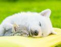 Sleeping On The Best Pillow: Dr. Ken Nakamura Downtown Toronto Chiropractor