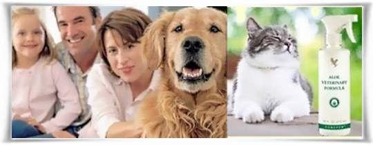 Προϊόντα Για Το Σπίτι Και Τα Κατοικίδια Ζώα Από Αλόη Βέρα της Forever Living Products #Pets #AloeVera #ForeverLivingProducts