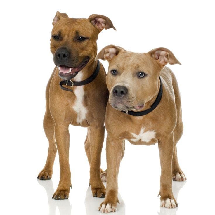 Dog stars in SHOW & TELL thriller...NAME THAT DOG! http://amyshojai.com/name-that-pet-vote/