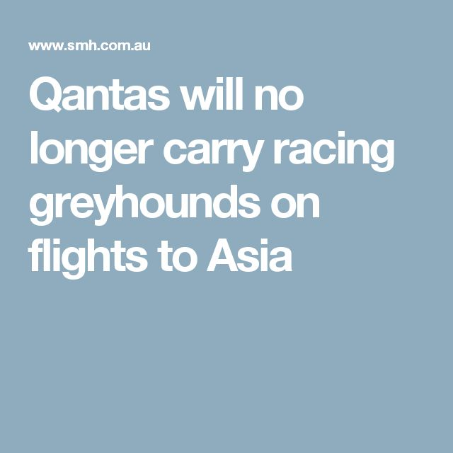 Qantas will no longer carry racing greyhounds on flights to Asia