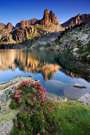 Pyrenees flowers - © Enrique Fernández