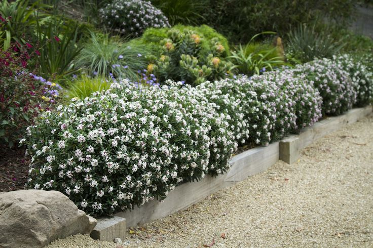 Low Maintenance Front Garden Ideas Driveways Landscape Design