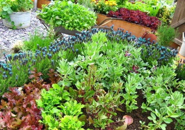 Vegetable garden - Plants and vegetables - Desain taman sayur - Gardening Tips: The Six Steps of Successful Vegetable Garden Design | Newsolio