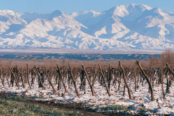 ¡Los vinos argentinos están de moda en la escena vinícola puertorriqueña! No te pierdas la nueva publicación de Divinísimo: http://www.sal.pr/2013/05/01/divinisima-argentina/