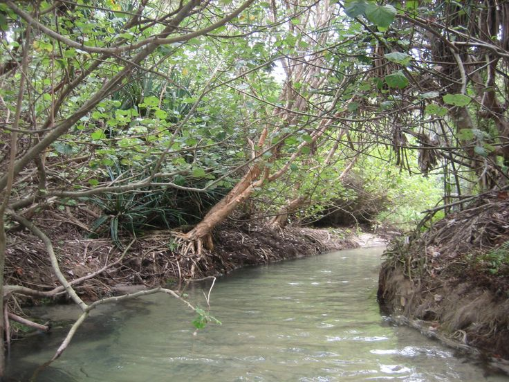 Eli Creek
