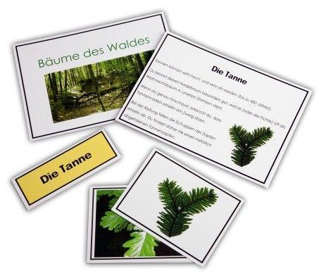 Bäume des Waldes