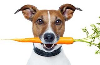 Homemade Dog Food Recipes for Small Dogs
