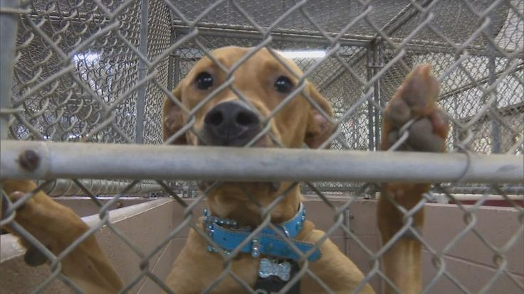 On Tuesday, the Harris County Animal Shelter received a big donation that they say will help save animals' lives and tackle the area's stray problem at its root.