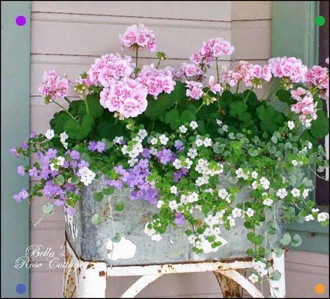 Rozeta Handmade Jakie Kwiaty Posadzi W Maju By Kwity Do Pnej Jesieni Czyli Kwiaty Na Balkon I Taras Na Porch Flowers Front Porch Flowers Container Flowers