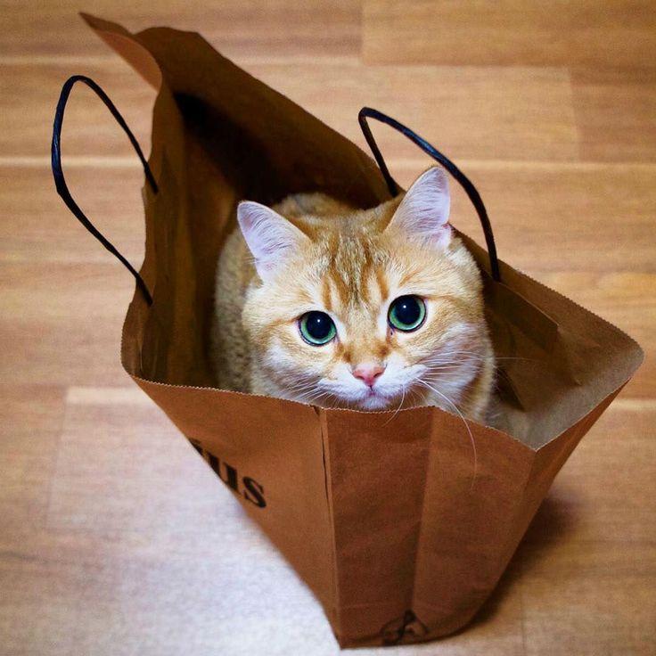 Hosico, die Katze, ist eine der schönsten Katzen, die Sie je gesehen haben (21.01.17)   – Cat Famous