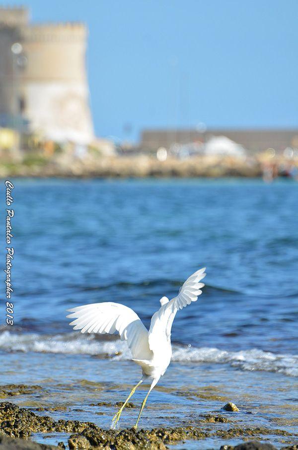 costa di Torre Vado, Salento, Puglia.