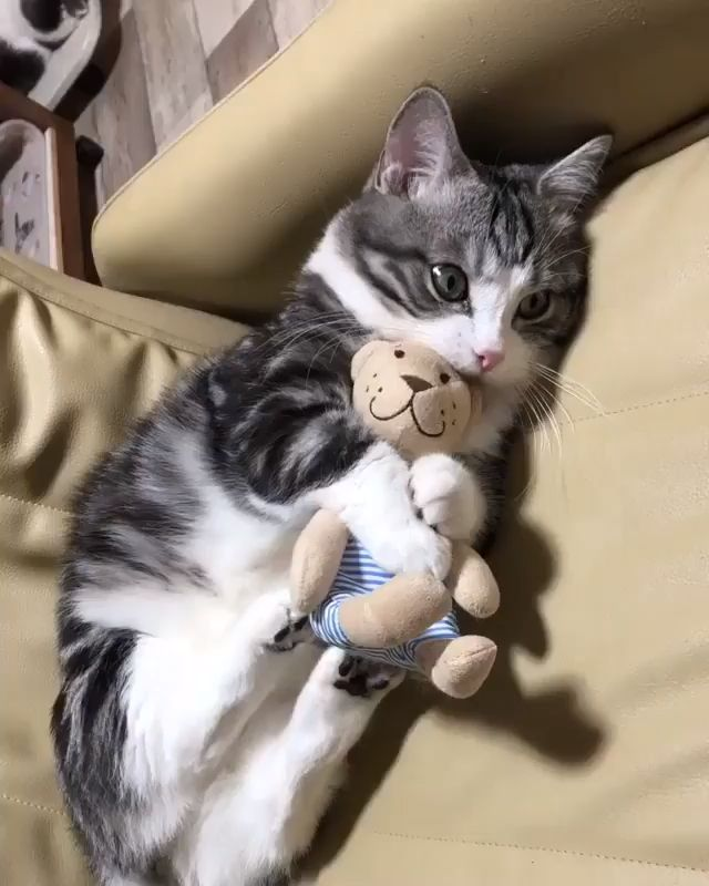 😍😍😍 Tag your friend's 👍cute cat video