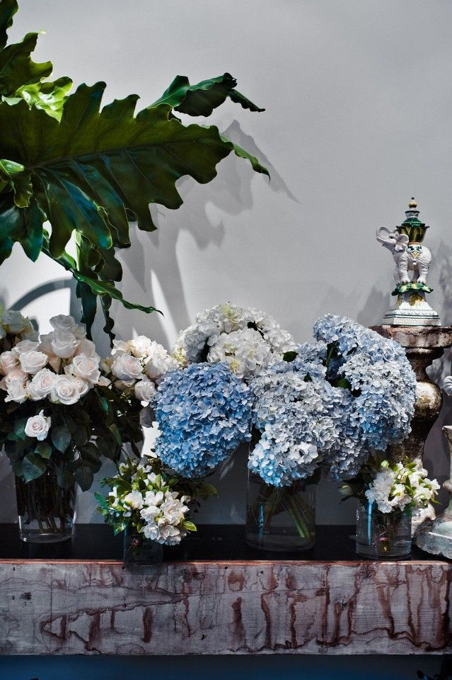 Beautiful Blue Flowers by @azbcreative
