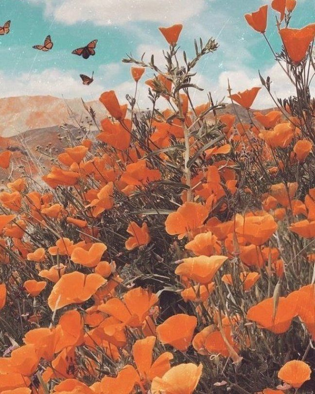 Wallpapers Orange Vintage Wallpapers Orange Wallpapers Wallpapers Orange Wallpapers Orange In 2020 Orange Wallpaper Orange Aesthetic Aesthetic Wallpapers