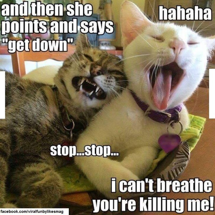 These 47 Funniest Memes Will Make You Laugh Out Loud Funny Cat Memes Funny Animals Funny Cats And Dogs