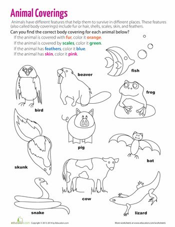 Worksheets: Body Coverings of Animals