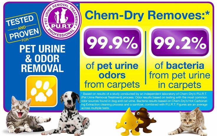 Dog Odor Cat Odor Call Johnson County Chem Dry Today 817 558 3113 Dogodor Catodor Catspray Petodor Peturi Pet Urine How To Clean Carpet Pet Smell