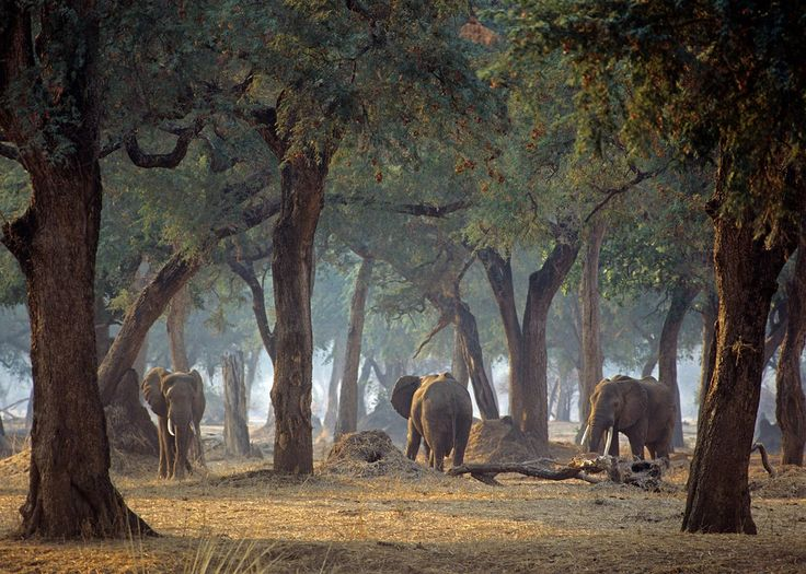 Mana Pools, Zimbabwe