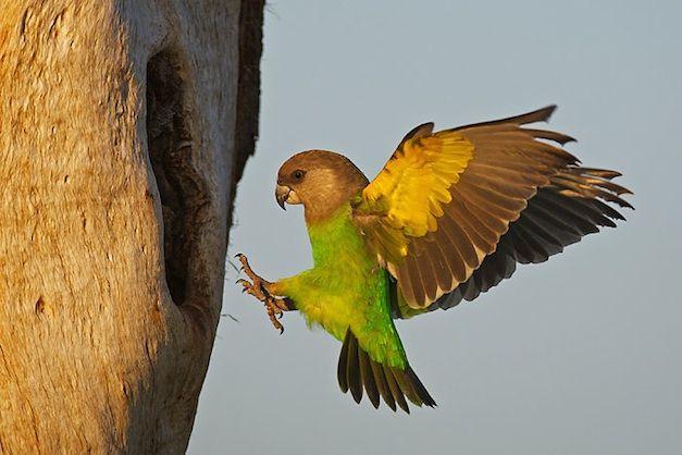 THIRD : Lee Slabber – Parrot
