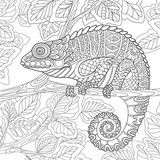 Vector: Zentangle stylized cartoon chameleon sitting on a tree branch. Hand drawn sketch for adult antistress coloring page, T-shirt emblem, logo or tattoo with doodle, zentangle, floral design elements.