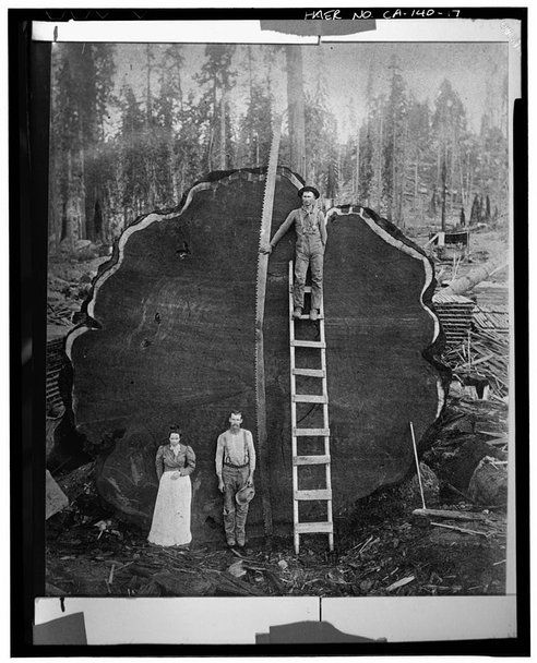 Just a Huge Tree From a Long Time Ago...Photos, Trees Trunks, Sequoia National Parks, Logs, California, Giants Sequoia, Trees Stumps, Photography, Mark Twain